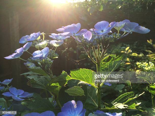 Illuminating Sunbeams