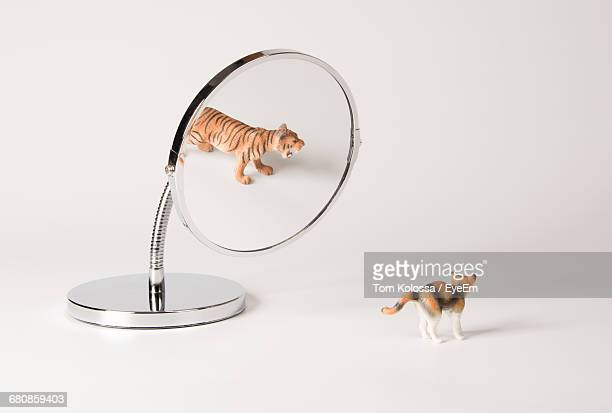 illusionary cat family reflection in mirror - illusion stock pictures, royalty-free photos & images