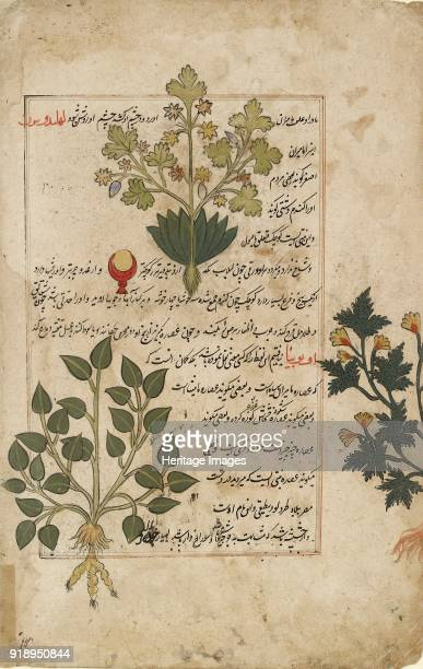 Illustrated double folio depicting thistles and other medicinal plants 1595