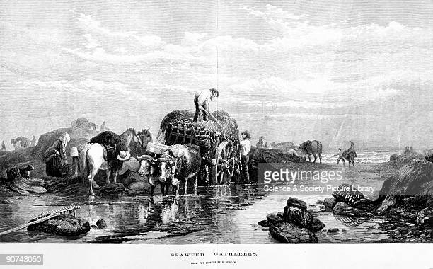 Illustration after a painting by E Duncan taken from an extra supplement to the �Illustrated London News� 28 November 1874 Laver one of the most...