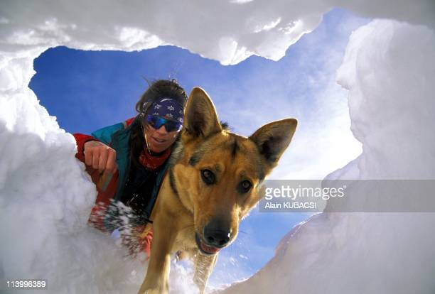 Illustration Avalanche dog in Tignes France in March 1996Avalanche dog