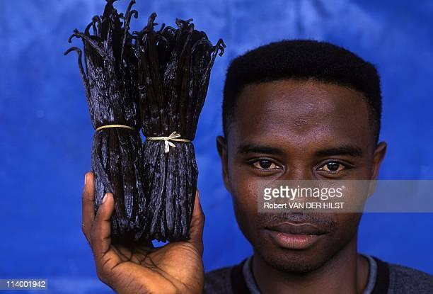 Illustration Comoros In Comoros In April 2003Vanilla sticks