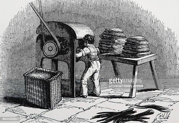 Illustration depicting a boy cutting flax stalks into length for heckling during the production of linen Dated 19th Century