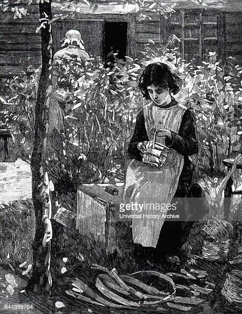 Illustration depicting a child preparing packing punnets in order for them to be taken to the strawberry fields Dated 19th Century