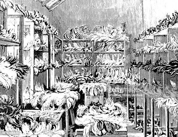 Illustration depicting ostrich feathers ready for packing and dispatch on an ostrich farm near Grahamstown South Africa Dated 19th Century