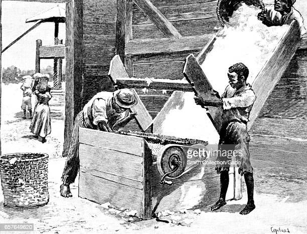 Illustration featuring several AfricanAmerican slaves using a manual cotton gin to process a cotton crop in the American South 1904