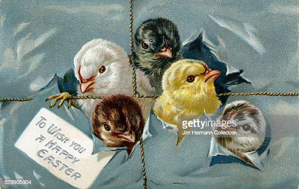 Illustration for Easter postcard featuring baby chicks emerging from wrapped present