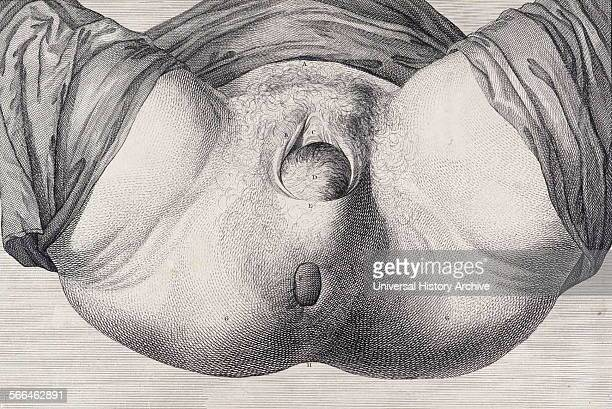 Illustration from 'A set of anatomical tables, with explanations, and an abridgment, of the practice of midwifery'. . By William Smellie a Scottish...