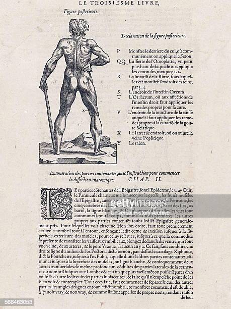 Illustration from 'Les oeuures d'Ambroise Pare´' 1585 by Ambroise Pare´ 15101590 French surgeon and anatomist