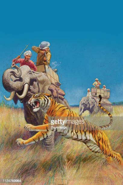 Illustration from Sports Afield magazine shows a hunter atop an elephant as he shoots a tiger 1936 This image appeared on the cover of the August...