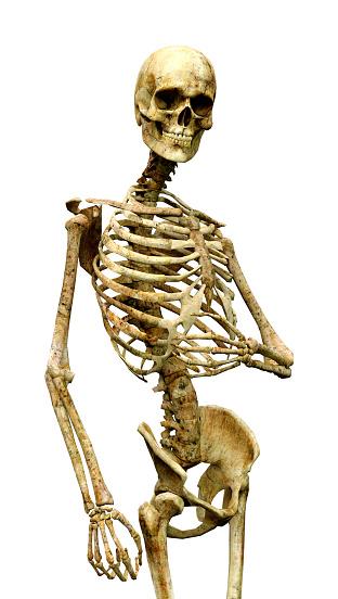 3D illustration human skeleton isolated white 1128041924