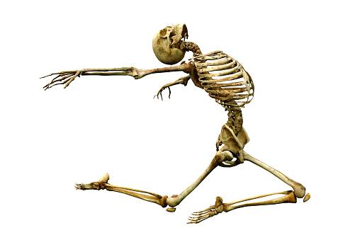 3D illustration human skeleton on white 983243392