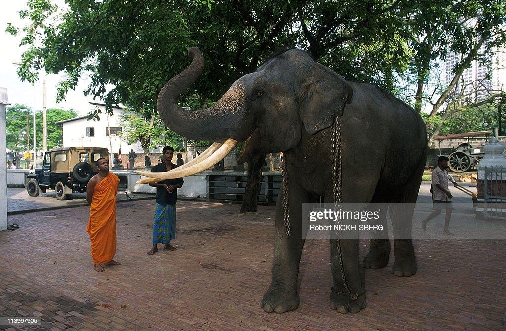 Illustration: In Sri Lanka In March, 1998- : News Photo