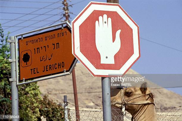 Illustration Jericho and the Jordan Valley in Israel on August 30 1993