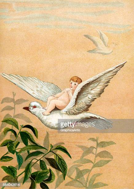 Illustration of a fairy riding a flying white dove 1882 Chromolithograph