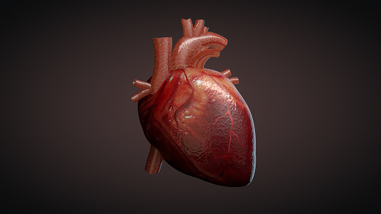 3D illustration of a human heart 921917296