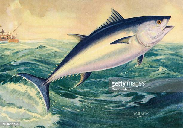 Illustration of a leaping bluefin tuna on the line of a fisherman 1950 Lithograph