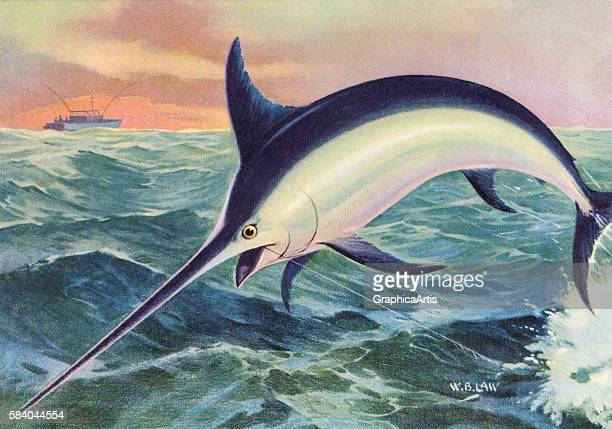 Illustration of a leaping swordfish on the line of a fisherman 1950 Lithograph