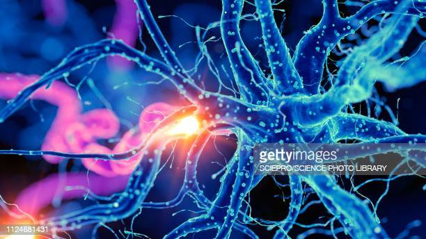 illustration of a nerverticale cell - neurons stock photos and pictures
