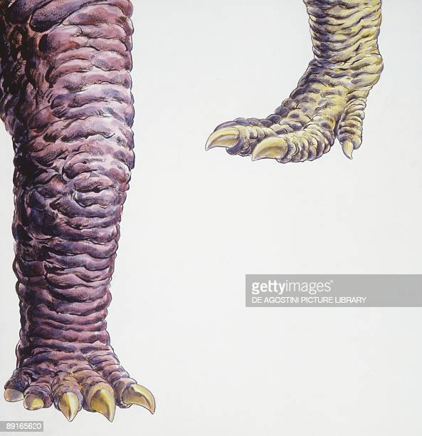 Illustration of Allosaurus close up of legs