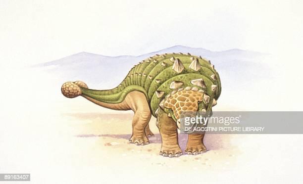 Illustration of Ankylosaurus
