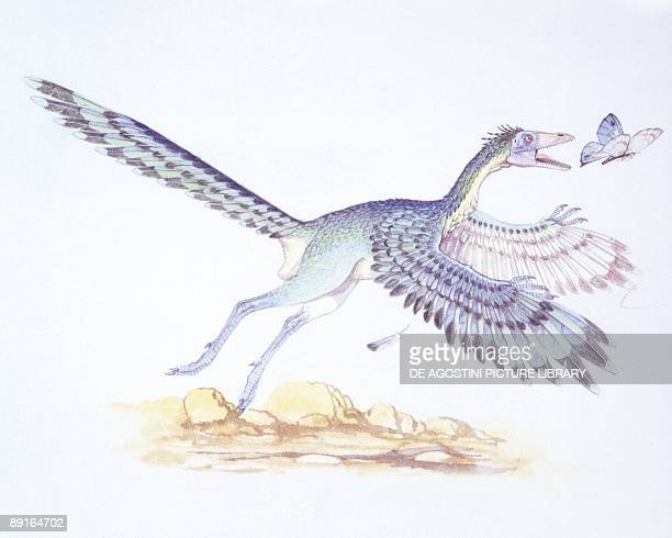 Illustration of Archaeopteryx chasing butterfly
