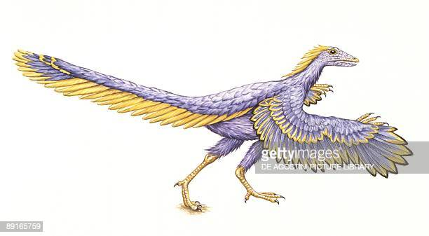 Illustration of Archaeopteryx on white background