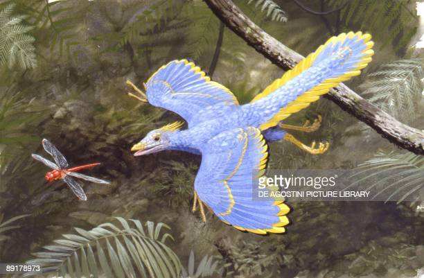 Illustration of Archaeopteryx preys on a dragonfly in forest