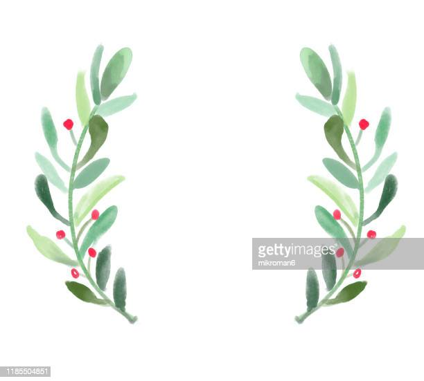 illustration of branches of tree, logo idea - christmas holly stock photos and pictures