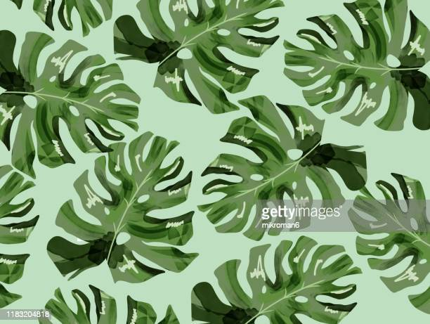 illustration of branches of tree tropical background - illustration stock pictures, royalty-free photos & images