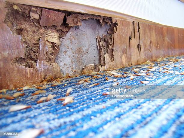 illustration of damages caused by pests - pest stock photos and pictures