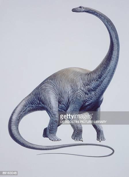 Illustration of Diplodocus