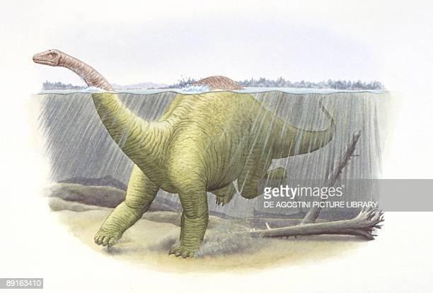 Illustration of Diplodocus swimming