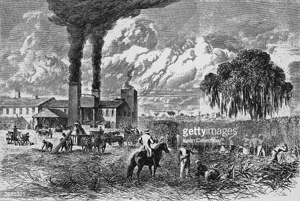 Illustration of slaves working on a sugar plantation in the Southern United States Mid19th Century