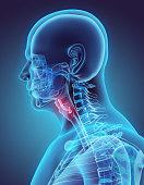 3D illustration of Epiglottis, medical concept.