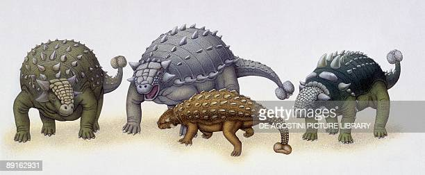 Illustration of four Ankylosaurus dinosaurs