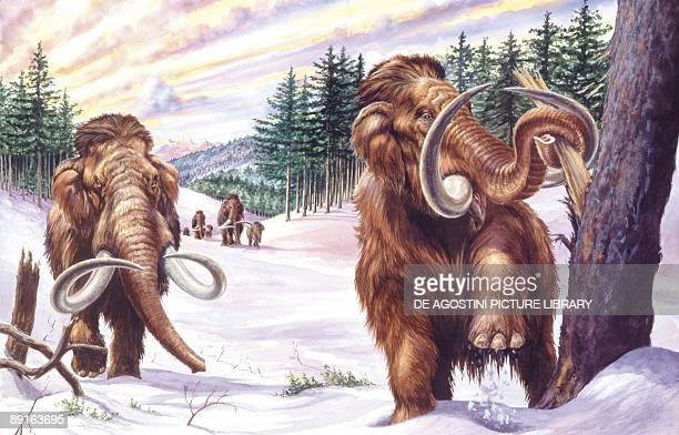 Illustration of herd of mammoths in winter landscape