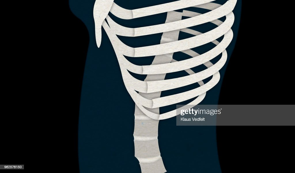 Illustration Of Human Ribs And Back Bone Stock Photo Getty Images