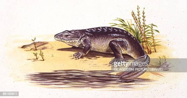 Illustration of Ichthyostega