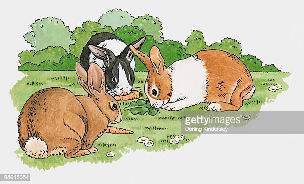 Illustration of pet rabbits eating carrots and lettuce leaf on grass in garden
