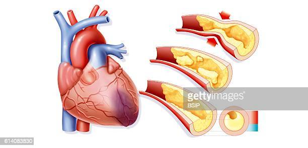 Human Internal Organ Stock Photos And Pictures Getty Images
