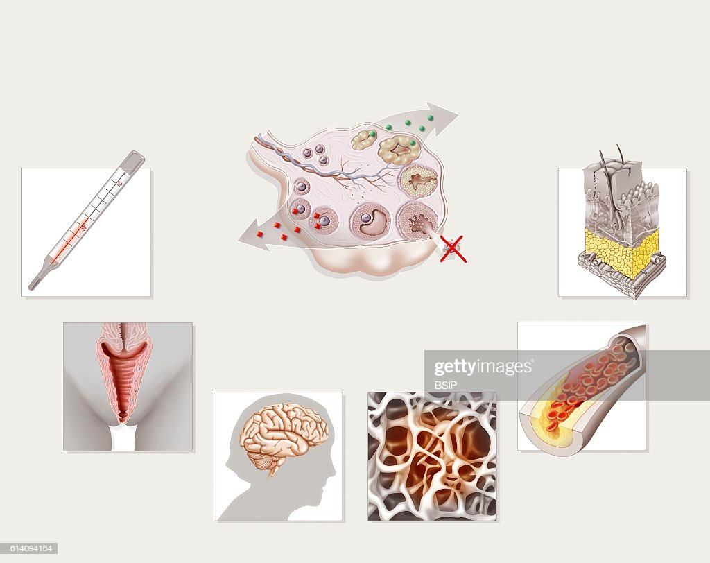 Menopause, illustration : News Photo