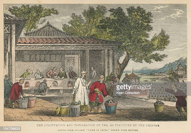 Illustration of the cultivation and preparation of tea as practised by the Chinese circa 19th century