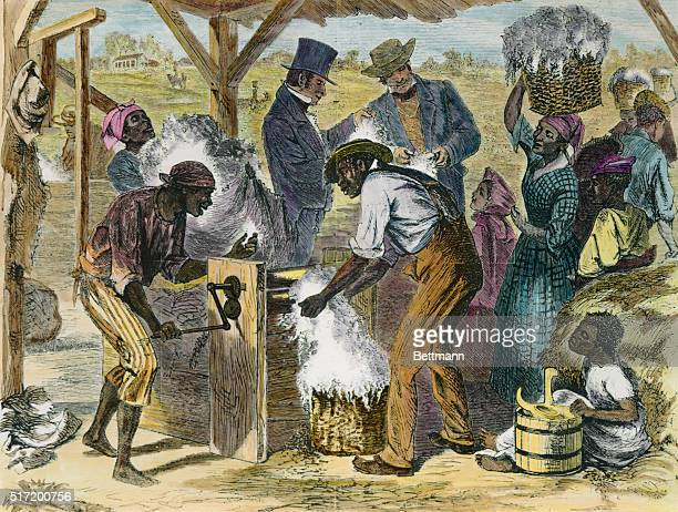 Illustration of the first cotton gin in useSlaves are shown depositing bales of hay into the gin for separation as an overseer stands by Circa 1870