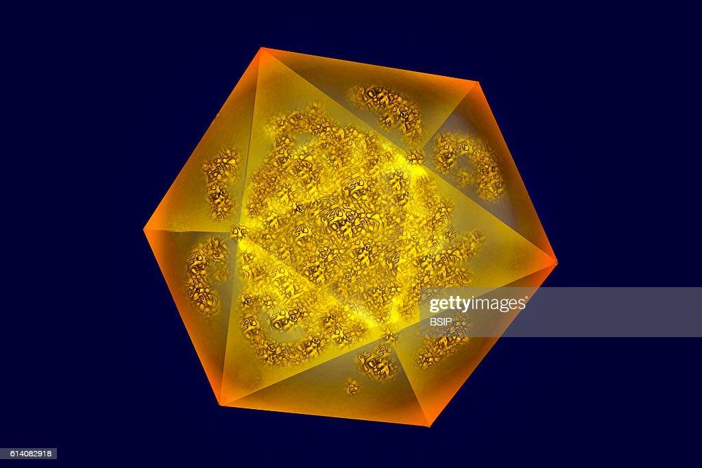 Hepatitis a virus : News Photo