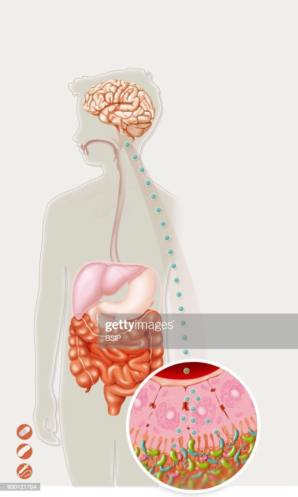 Gut Flora & Brain Pictures | Getty Images