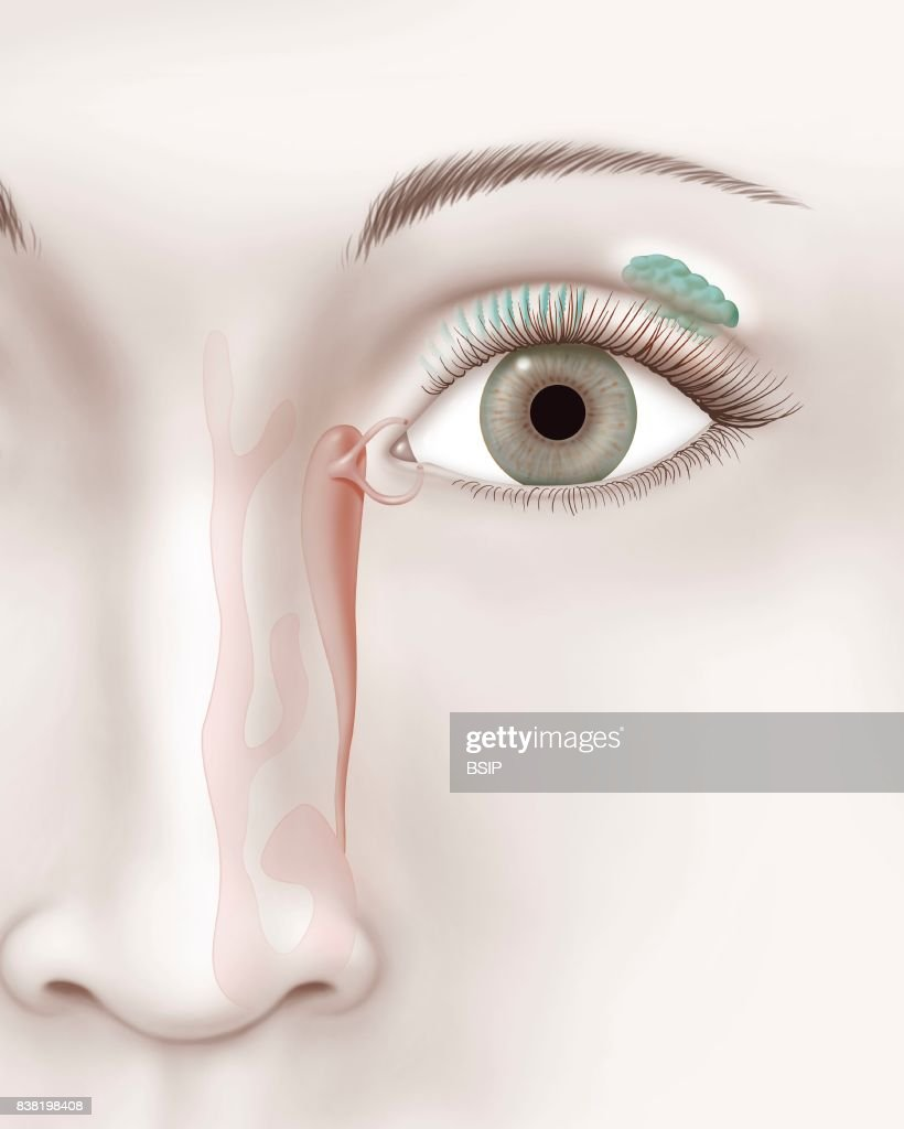 Illustration of the tear ducts. News Photo   Getty Images