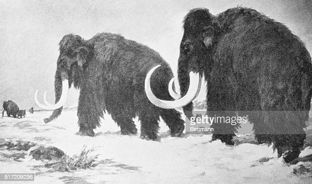 Illustration of two wooly mammoths walking through a snowy tundra