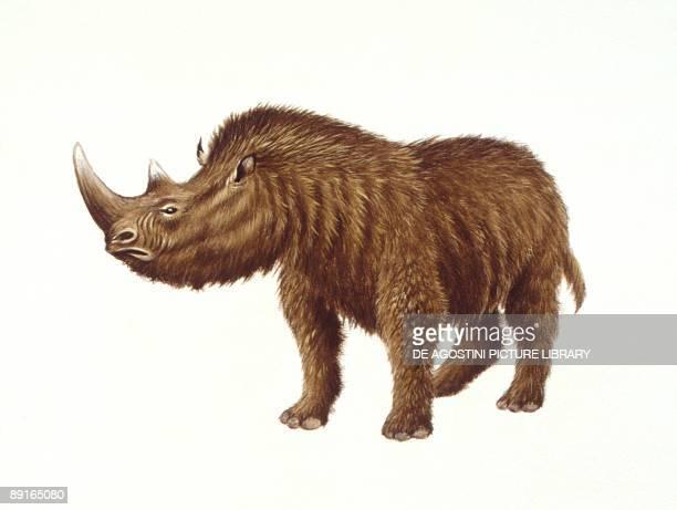 Illustration of Woolly Rhinoceros