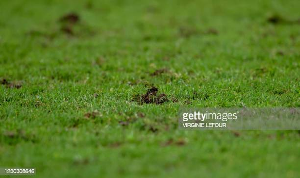 Illustration picture shows the grass pitch during a soccer match between KV Kortrijk and KAA Gent, Saturday 26 December 2020 in Kortrijk, on day...